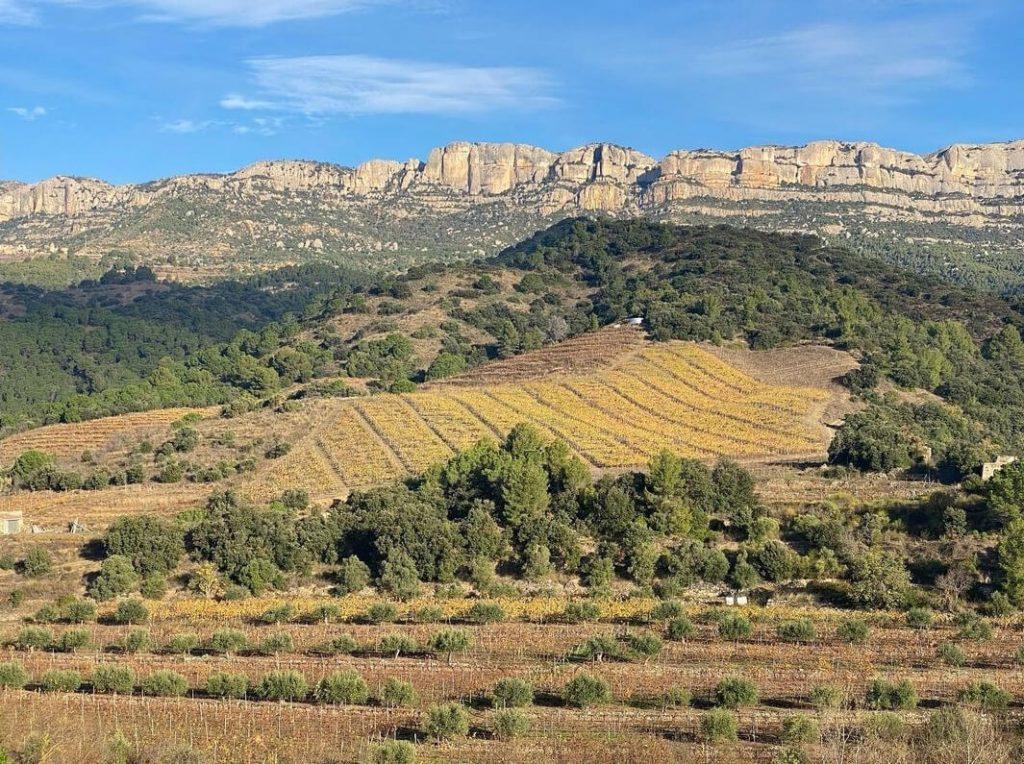 Bodega Mas Doix (paisaje)